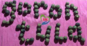 goron tula boosts fertility