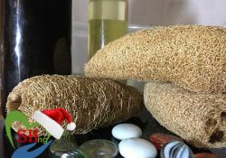 Loofah and how to use and side effects