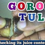 how to make goron tula juice