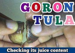how to make goron tula juice