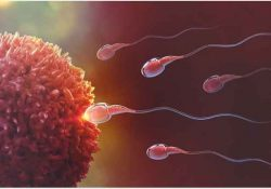 Ovulation and when a woman's egg is ready for fertilisation