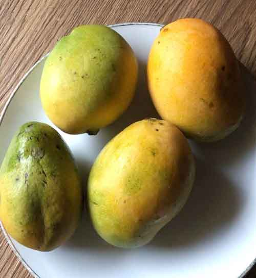 health benefits of mango and anti-cancer benefits