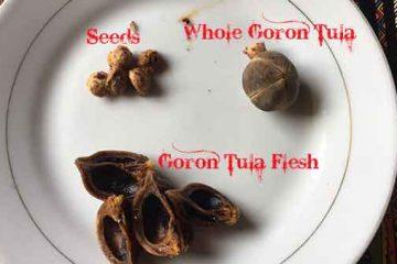 how to eat goron tula